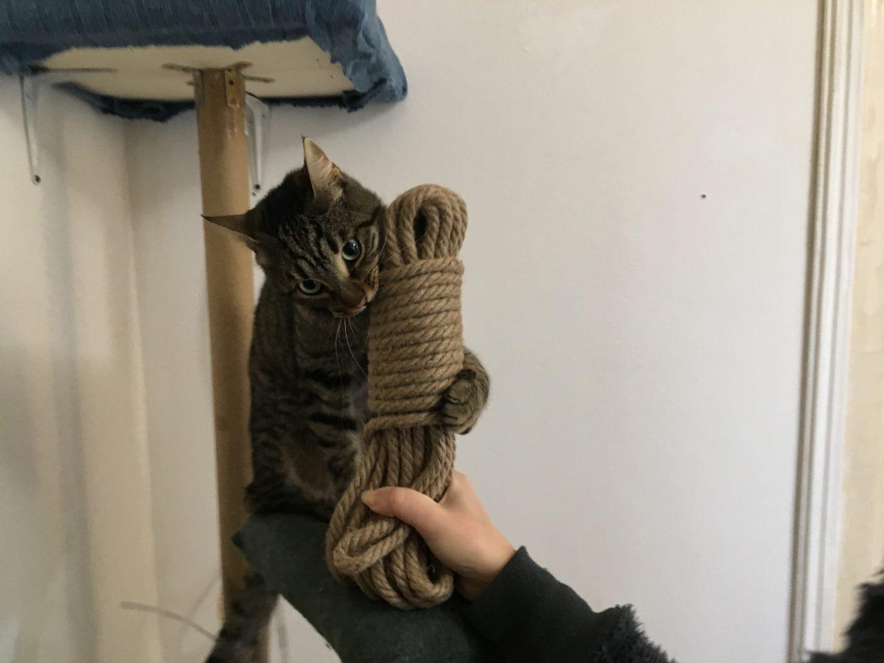 gatto corda