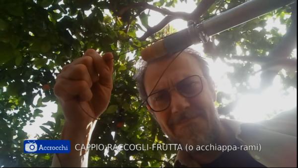 L'ACCHIAPPA-RAMI PER FRUTTI TROPPO ALTI